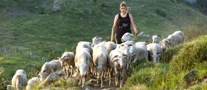 pastore femminile plurale